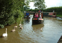 swans and ducks make freinds for treats on canal holidays